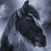 Portrait  by daniel-herr
