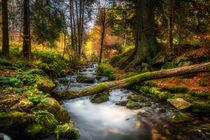 November Breath by daniel-herr