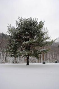 Snowy Tree, 2016 von Caitlin McGee