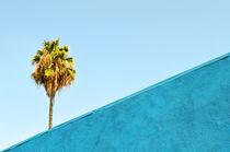 Palm Tree / L.A. von Peer Eschenbach