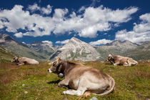 Cows in Switzerland by Frank Tschöpe