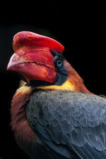 Feuerhornvogel I von elbvue von elbvue