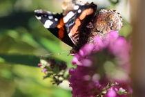 """""""Pfauenauge auf Schmetterlingsblüten"""" 1 von Simone Marsig"""