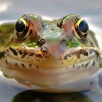 Leopard Frog  von Amber D Hathaway Photography