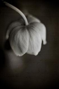 cure by Josephine Mayer-Hartmann