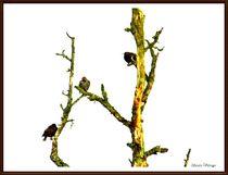 ~ Birds in Cold Season ~ by Sandra  Vollmann