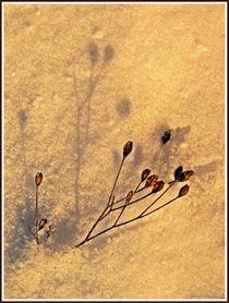 ~Filigree in the Snow~ von Sandra  Vollmann