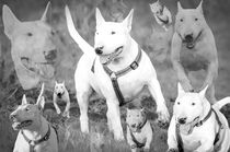 White Bulli Collage sw by toeffelshop