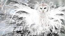 Owl von Pascal Cavegn