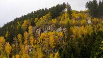 Herbstfarben #2 von fakk