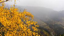 Herbstfarben von fakk