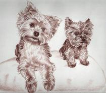 Two Yorkis von Nicole Zeug