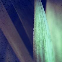 Drops & Stripe by Josephine Mayer-Hartmann