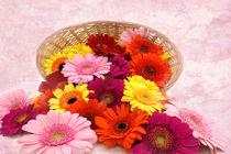 Blütenköpfe im Korb von darlya