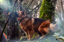 Magic in the forest and the wonderful dog von Shumilov Ludmila