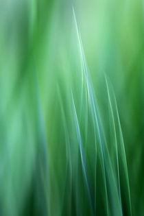 aufstrebendes Grün by lightart