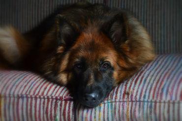 Prim-on-the-sofa