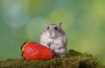 Hamster / 3 von Heidi Bollich