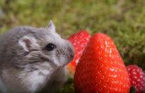 Hamster / 2 von Heidi Bollich