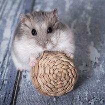Hamster / 1 von Heidi Bollich