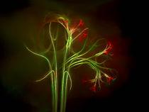 Blütendekadenz by Susanne Schönberger