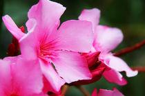 Flowerpower by mariellemeerfrau
