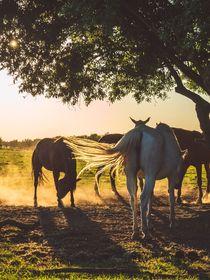 Pferde auf der Koppel von Franziska Mohr