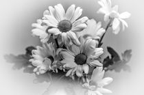Chrysanths-dot-bw