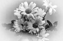Chrysanths-dot-bw