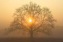 Die Sonne in der Baumkrone von Bernhard Kaiser
