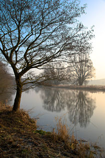 'Bäume am Ruhrufer' by Bernhard Kaiser