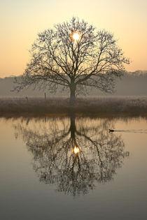 Der Baum und die Sonne von Bernhard Kaiser