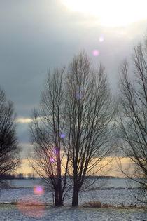 Seelenfeuer - Sonnenfleckchen von Marion Bönner