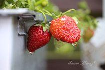 Erdbeeren zwei mit Wassertropfen -reif- von Simone Marsig