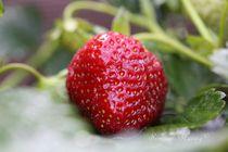 Erdbeere so leuchtend reif von Simone Marsig