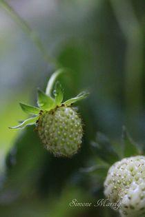 Erdbeere unreif 1. von Simone Marsig