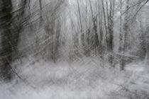 Waldfrost von Daniel Burdach