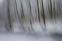 Wald abstrakt von Daniel Burdach