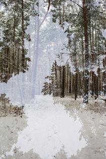 Vielfalt im Winterwald by Daniel Burdach