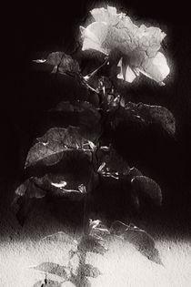 Der letzte Hauch  by Bastian  Kienitz