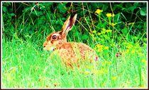 ~Animals in Nature Hare~ von Sandra  Vollmann