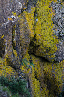 Moss growing on rock von Perry  van Munster