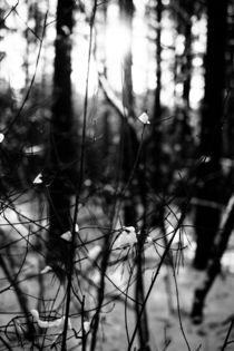 Zweige befreien sich vom Schnee by aseifert