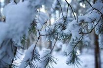 Zweige befreien sich vom Schnee 6 by aseifert