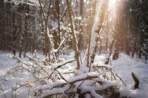 Winter Landschaft by aseifert