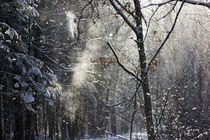 Schneegestöber by aseifert