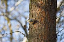 Vögel im Winter von aseifert