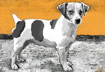 ~Jack Russell Orange ~ by Sandra  Vollmann