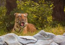 Tiger by kala-sangraha