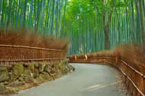 Path through Arashiyama bamboo forest near Kyoto, Japan by Sara Winter